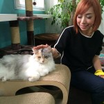#nadskai visited Lion City Kitty, The Cat Museum